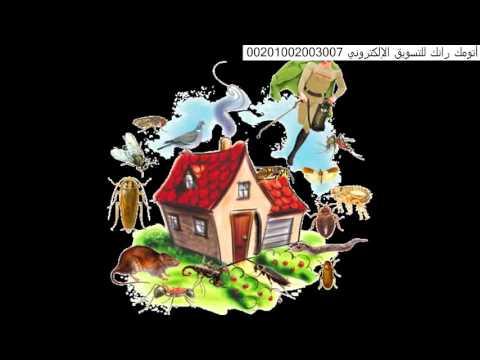 شركة مكافحة النمل الابيض بالرياض – افضل شركات رش مبيدات بالرياض 0551128002