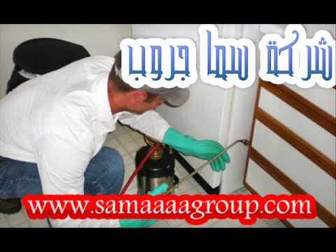شركة مكافحة النمل الابيض بالرياض – شركة رش مبيدات بالرياض-سما جروب