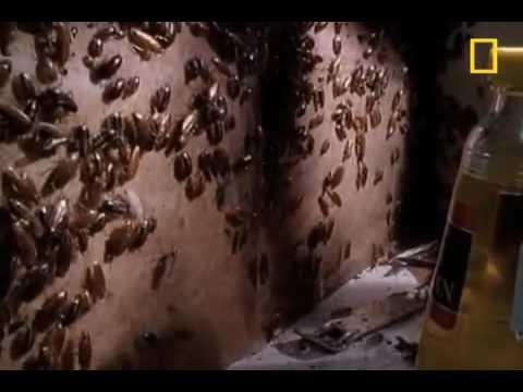 شركة مكافحة النمل الابيض بالرياض – شركة رش مبيدات الحشرات من المنازل أضواء المنارة