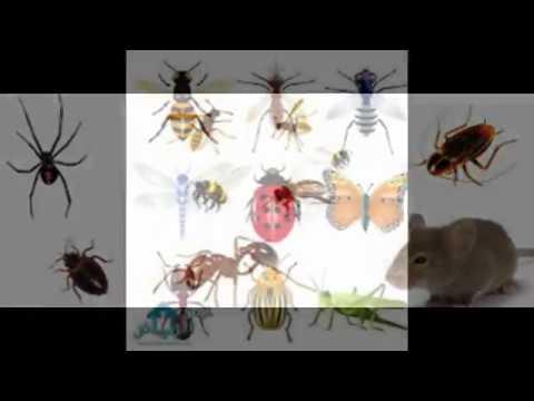 شركة مكافحة النمل الابيض بالرياض – شركة رش مبيدات بالخرج 0508939018 مكافحة حشرات بالخرج